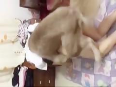 trio con perro