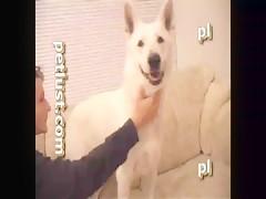 Aline contra perro