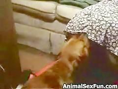 dog girl - Zoo sex porn