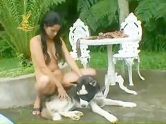 husky likes brazileña