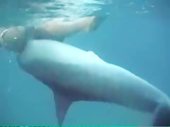 Sexy Dolphin Gangnam Style - Zoo sex porn - Zoosexnet